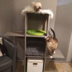arbre à chats étagères, modulable