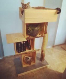 arbre à chats en bois flotté et caisses en bois - Art by Ze studio Annecy